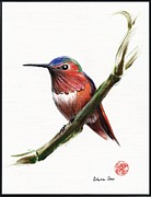 Hummingbird Drawings Metal Prints - Little Hummer Metal Print by Rebecca Rees