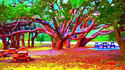 Live Oak Trees Paintings - Live Oak Picnic Ground by CHAZ Daugherty