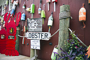 Lobster Sign Posters - Lobsters and Buoys Poster by Betsy A Cutler East Coast Barrier Islands