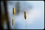 Aperture Photos - Lone Buds by John McArthur