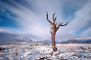Lone Tree Framed Prints - Lone tree in the snow Framed Print by Grant Glendinning
