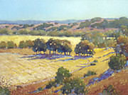 Joyce Art - Long Shadows at Los Olivos by Joyce Hicks