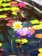 Japanese Garden Posters - Lotus Pond Poster by Susan Savad