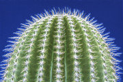 Sandra Bronstein - Magic of the Saguaro