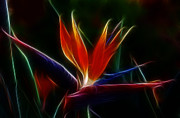 Sandra Bronstein - Magical Bird of Paradise