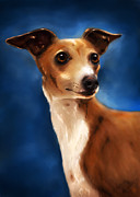 Greyhound Greeting Cards Digital Art - Magnifico - Italian Greyhound by Michelle Wrighton