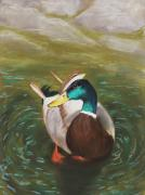 Animal Art Pastels Prints - Mallard Print by Anastasiya Malakhova