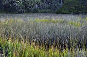 Beach Photographs Art - Marsh Grasses and Moss-Covered Trees on Jekyll Island 1.2 by Bruce Gourley