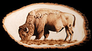 Bison Pyrography Prints - Massive Print by Minisa Robinson