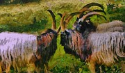 Goat Mixed Media Posters - Meeting Of Bagot Goats  Poster by Janice MacLellan