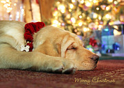 Puppies Digital Art Posters - Merry Christmas from Lily Poster by Lori Deiter