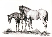 Graphite  Drawings Paintings - Mesa Country Colts by Sandy Campion