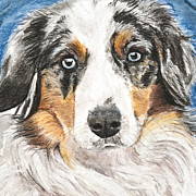 Isolated Pastels Posters - Miniature Australian Shepherd Poster by Kate Sumners