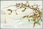 Christmas Eve Drawings Metal Prints - Mistletoe in the Snow Metal Print by English School