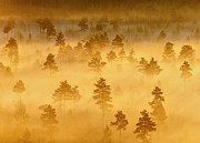 Misty Trees In The Morning by Teemu Tretjakov