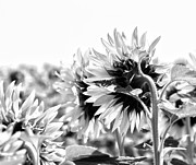 Consumer Framed Prints - Monochrome Summer Framed Print by Georgia Fowler