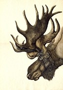Alfred Ng - Moose Watercolor