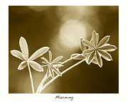 Morning Fine Art Print by Artist and Photographer Laura Wrede