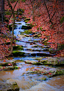 Boone County Prints - Mossy Creek Print by Cricket Hackmann