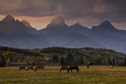 Grazing Horse Posters - Mountain Meadow at Autumn Poster by Andrew Soundarajan