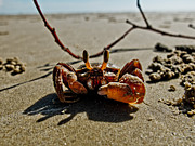 Will Cardoso Metal Prints - Mr. Crab Metal Print by Will Cardoso