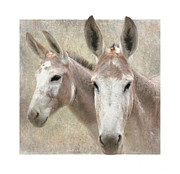 Mule Photos - Mules of a Different Color by Angie Vogel