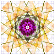 Square Art Photos - Multi Flower Abstract by Mike McGlothlen