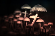 Nature Study Photo Prints - Mushroom Tribe Print by Michael Huddleston