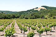 Vineyard In Napa Photo Posters - Napa Vineyard with Hills Poster by Shane Kelly