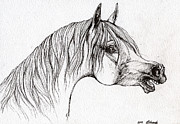 Horses Drawings - Neighing arabian horse by Angel  Tarantella