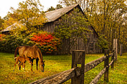 Split Rail Fence Framed Prints - New Foal Old Home Place Framed Print by Randall Branham