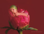 Fine Art Flower Photography Posters - Niko in Peony Poster by Anne Geddes
