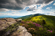 Nc Posters - North Carolina Blue Ridge Mountains Roan Rhododendron Flowers NC Poster by Dave Allen