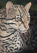 Lynx Painting Posters - Ocelot Poster by Laura Regan
