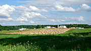Amish Photographs Posters - Ohio Amish Farm Poster by Lila Fisher-Wenzel