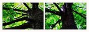Barks Prints - Old Barks Diptych - Deciduous Trees Print by Barbara Griffin