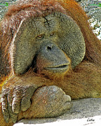 Orangutan Digital Art Metal Prints - Old Man Of The Forest Metal Print by Larry Linton