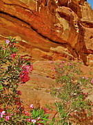 Jordan Trail Framed Prints - Oleander Along Trail from the Monastery in Petra-Jordan Framed Print by Ruth Hager