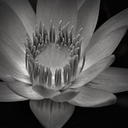 Blue Flowers Photo Posters - Om Mani Padme Hum Hail to the Jewel in the Lotus Poster by Sharon Mau