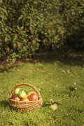 Apple Photos - Orchard by Christopher and Amanda Elwell