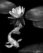 Jennie Marie Schell - Oriental Koi Fish and Water Lily Flower...