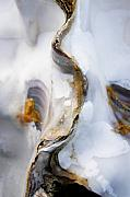 Shell Photos - Oyster  by Richard George