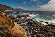 Carmel Prints - Pacific Coast Life Print by Mike Reid