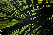 Palm Shadows Fine Art Print by Joe Kozlowski