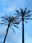 Diana Haronis - Palm Trees Against the Sky