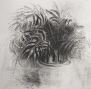 Potted Drawings Metal Prints - Palms Metal Print by Steve Dininno