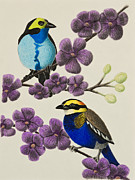 Jeanette Kabat - Paradise Tanager and Banded Pitta