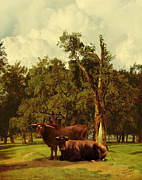 Cows Digital Art - Pastureland by Schwartz