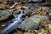 Rivers In The Fall Photo Prints - Peaceful Woodland Stream Print by Andrew Pacheco