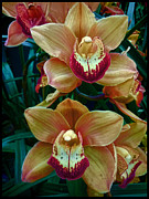 Peach And Red Orchids Print by Douglas MooreZart
